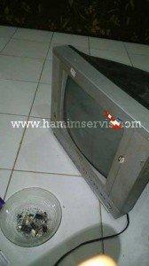tv-sanken